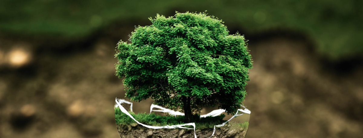 Umweltbewusstsein im Gewerbebau